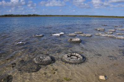 b2ap3_thumbnail_1900-Lake-Thetis-and-Stromatolites.JPG